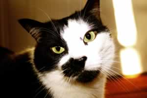 4 Inbound Marketing Lessons From Cats